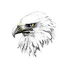 Eagle - Connection to spirit by AirDrawn