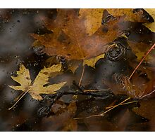 A Frog in the Fall Photographic Print