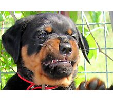 Funny Grumpy Faced Rottweiler Puppy  Photographic Print