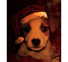 Puppy Peppa  Photographic Print