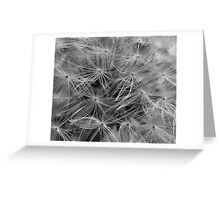 Dandelion Seed Head (abstract) Greeting Card