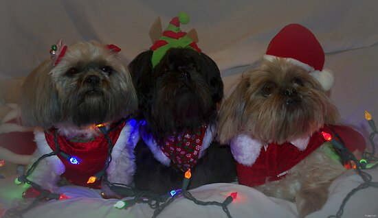 Santas Family by Nicole  Markmann Nelson