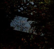Reflection of an Autumn Reality by alltherowboats