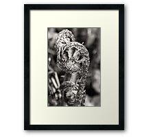 New Zealand Fern Frond b/w Framed Print
