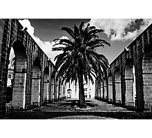 Palm in the Middle Photographic Print