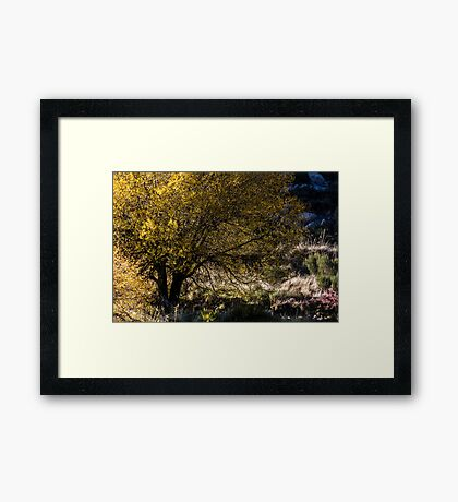 Colors of the Mountain Framed Print