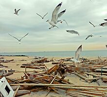 After hurricane Sandy by Eugenia Gorac