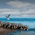 Morning Cormorants by Ryan Carter