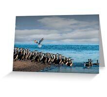 Morning Cormorants Greeting Card