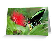 Cairns Birdwing Butterfly, Lunch at Mission Beach Greeting Card
