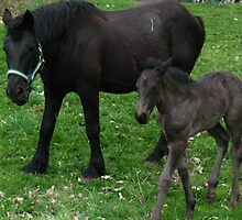 Mare & Foal Draft Horses  by Liesl Gaesser