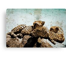 Cheetas in the African Serengetti Canvas Print