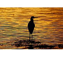 Basking in the glow of the morning sunrise Photographic Print