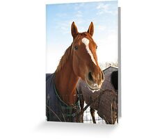 Happy Horse in Winter Greeting Card