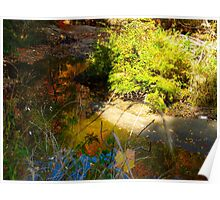 Basking in the reflections of Autumn Poster