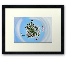 Poppy Orb Framed Print