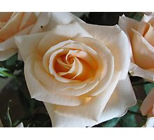 Better than apricots is this Apricot Rose ... Photographic Print