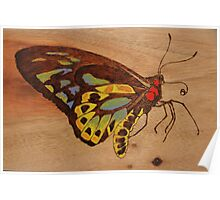 PYROGRAPHY: Richmond Birdwing Butterfly Poster