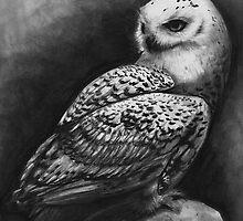 Snowy Owl by Brittney Lawrence