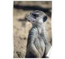 Cute Meerkat Poster