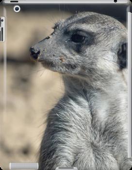 Cute Meerkat by Vac1