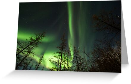 Yukon Northern Lights 1 by Phil Hart