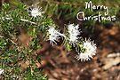 Native Christmas by Lynne Kells (earthangel)