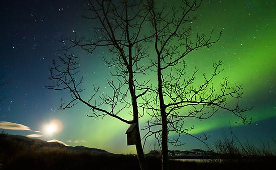 Yukon Northern Lights 2 by Phil Hart