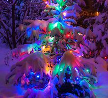 Colored lights on a snowy pine tree by Michael Brewer