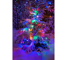 Colored lights on a snowy pine tree Photographic Print