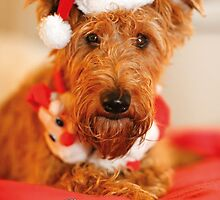 Christmas Grreetings by Trish  Anderson