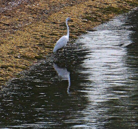 Upon Reflection! by Nancy Richard