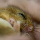 Sleepy Dormouse by Neil Bygrave (NATURELENS)