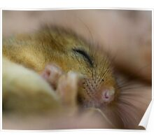Sleepy Dormouse Poster