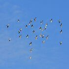 flock of doves by Jicha