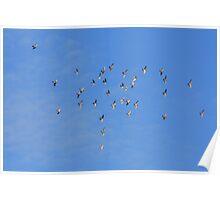 flock of doves Poster