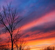 Bare tree silhouetted by vibrant sunset by DArthurBrown