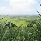 Grassy Hill by thejessis