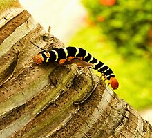 Larva by JAQUETE Photography
