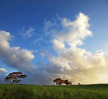 Mauritius - Cane Fields & Fire Trees by mattnnat