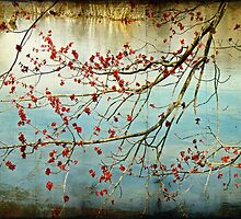 Budding Out - Tylersport Open Space Pond - PA by MotherNature