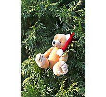 Christmas bear  Photographic Print