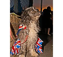 Great British Pooch Photographic Print