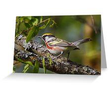 Chestnut-sided Warbler II Greeting Card