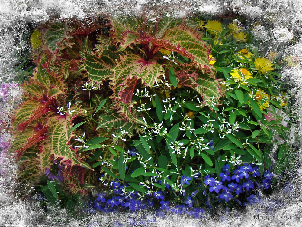 A Planter Garden at Coffee O - Falmouth MA by MotherNature