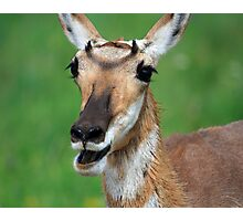 Happy Pronghorn Antelope Photographic Print