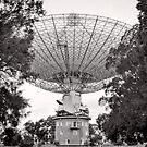 Hello? - Parkes - NSW - Australia by Norman Repacholi
