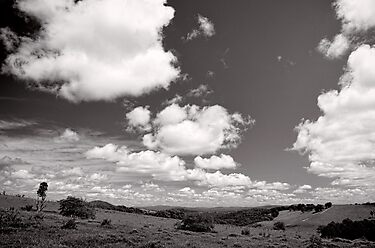 Valley of Clouds - Dorrigo - NSW - Australia by Norman Repacholi