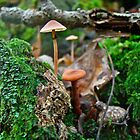Mushroom Forest Garden by MotherNature
