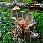 Mushroom Forest Garden by MotherNature